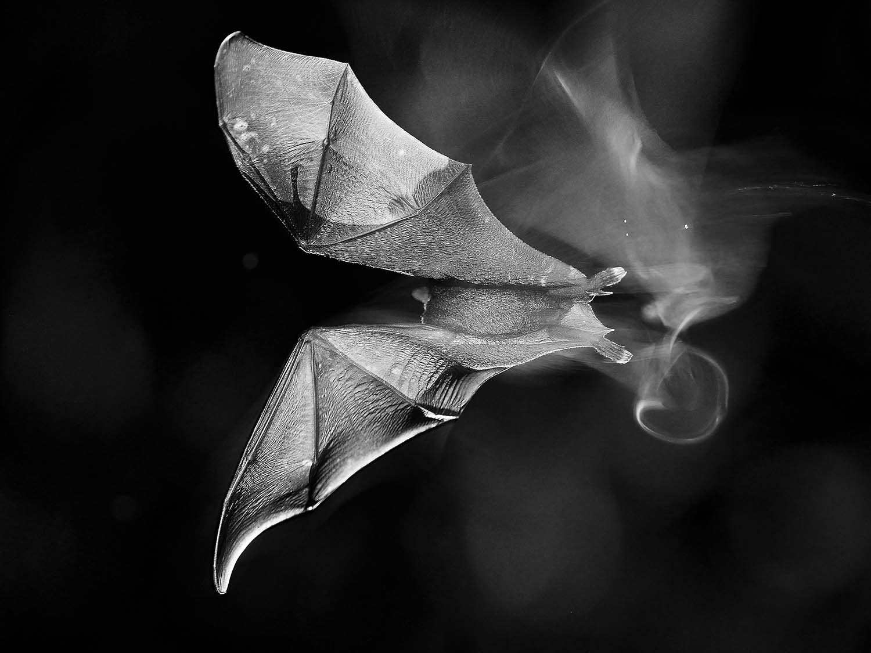 © Tibor Kercz, Hungary, Commended, Open, Nature and Wildlife, 2016 Sony World Photography Awards