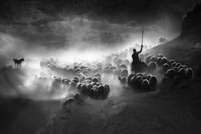 Sony Dünya Fotoğraf Ödülleri – Türkiye Ulusal Ödülünü Kazanan İsim Belli Oldu!