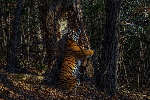 ©_Sergey_Gorshkov__Wildlife_Photographer_of_the_Year_2020
