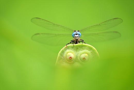 Blue Eyes, Green Eyes — Finalist Photographer: Minghui Yuan (East Lake, Wuhan, China)