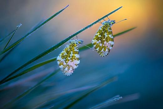 Cold Morning Tips — Finalist Photographer: Petar Sabol (Goričan, Croatia)