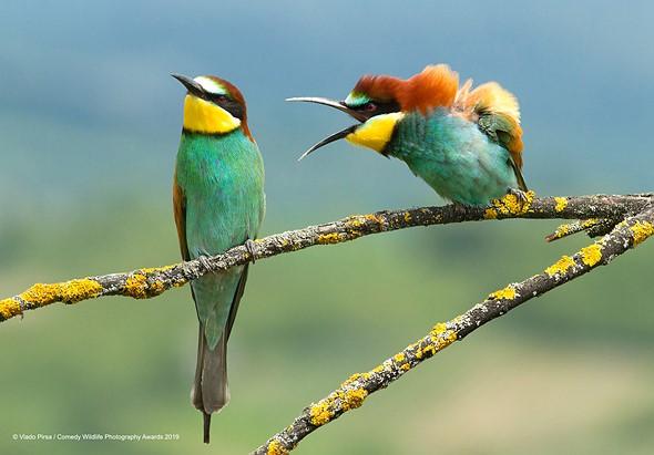 ©Vlado-Pirsa/ Comedy Wildlife Photography Awards 2019 — Family disagreement