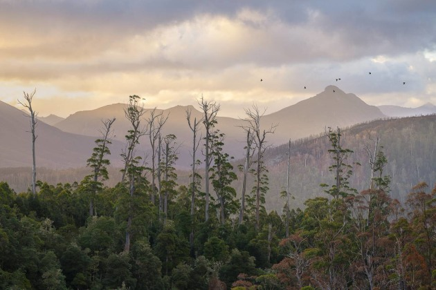 © Matt Palmer. 2019 AIPP Australian Professional Photographer of the Year.