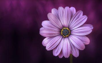 çiçek fotoğrafı çekmek