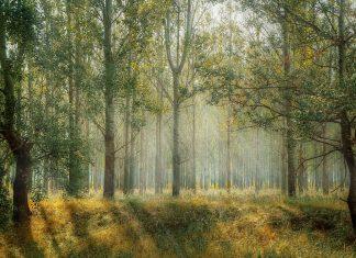 Orman ve Yaşam Fotoğraf Yarışması