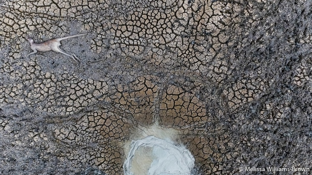 Winner, Our Impact (depicting human impact on nature). The Watering Hole, Melissa Williams-Brown (SA)