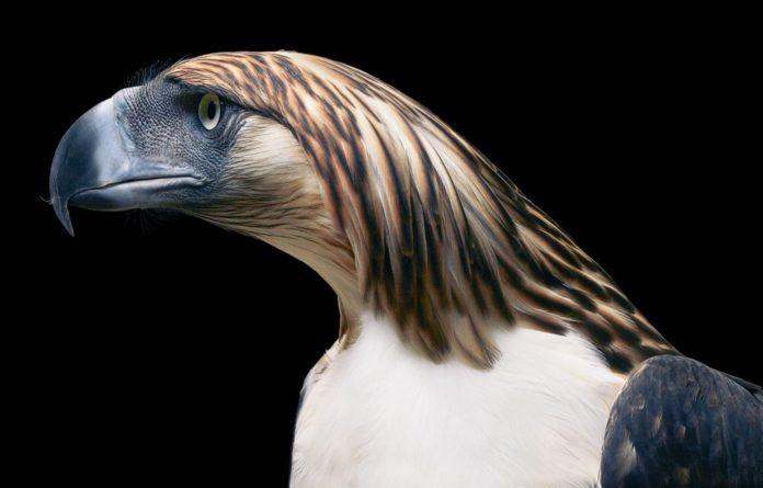 Nadir ve Sıradışı Kuşlar, İnsan Gibi Fotoğraflanırsa!